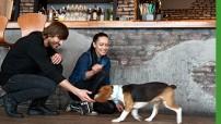 Restaurantes con perros