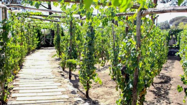 Bosco de Medici Winery Giardino