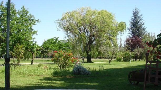 Le Saule Pleureur Jardin