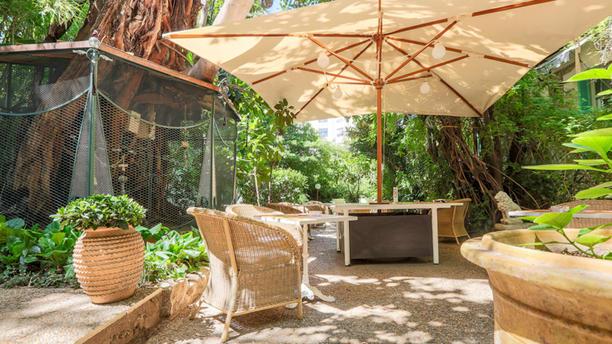 Wi Jungle - Hotel WindsoR Terrasse