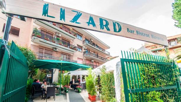 Lizard Entrata
