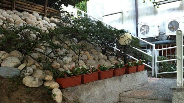 Pulcinella scalinata con piantine