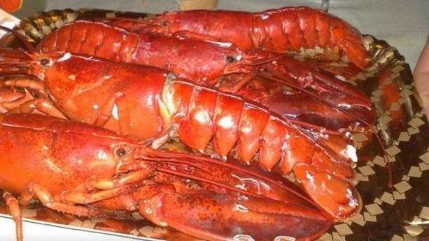 cucina san domenico aragoste freschissime