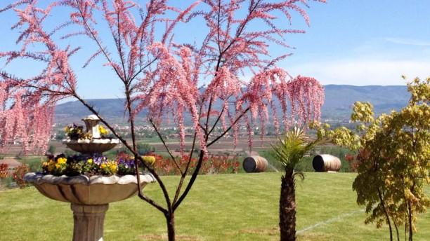 Bodegas Ayagar Jardín