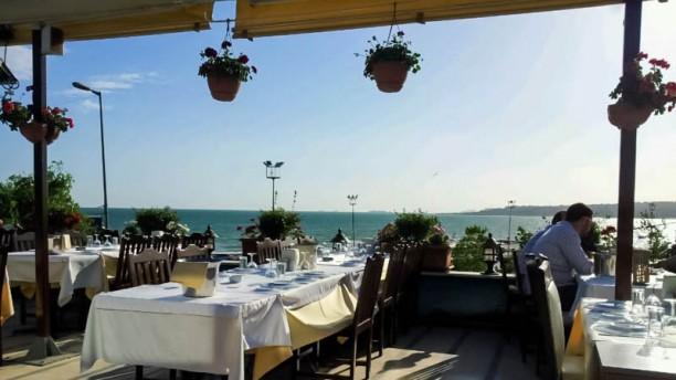 Massmavi Balık Terrace