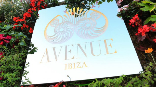 Avenue Ibiza Cartel