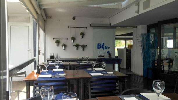 Blue Finn Llavaneres sala