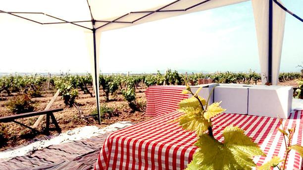 MALTESE winery Vista vigneto... c/da Birgi Vigna Perricone