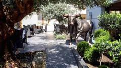 Cyrille Billot - Restaurant - Saint-Maur-des-Fossés