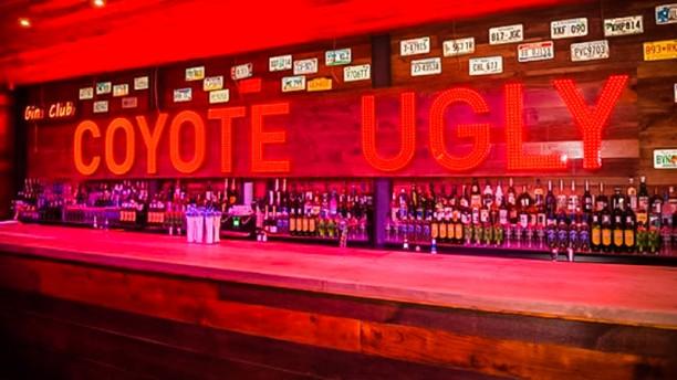 Coyote Ugly Bar bar