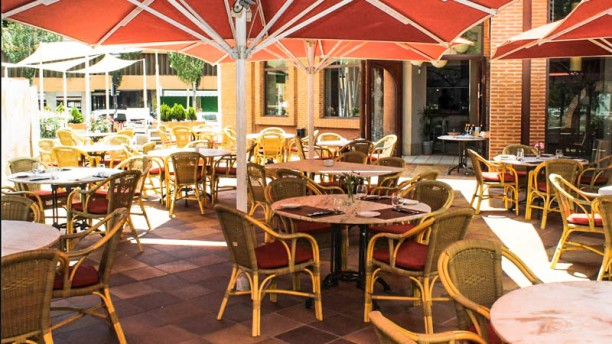 Wild Ibiza Restaurant La terraza
