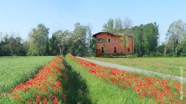 Antica Osteria Lungoladda una scampagnata nel verde della Padana