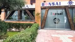 Bonsai Avenida Cataluña