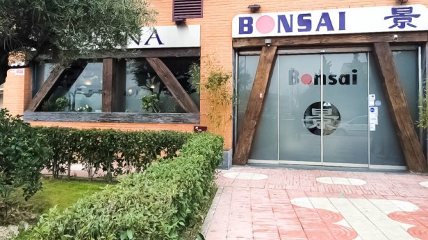 Bonsai Avenida Cataluña Entrada