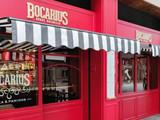 Bocarius