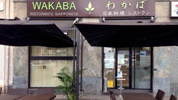 Wakaba Baiamonti wakaba