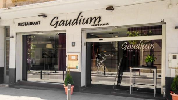 Gaudium entrada