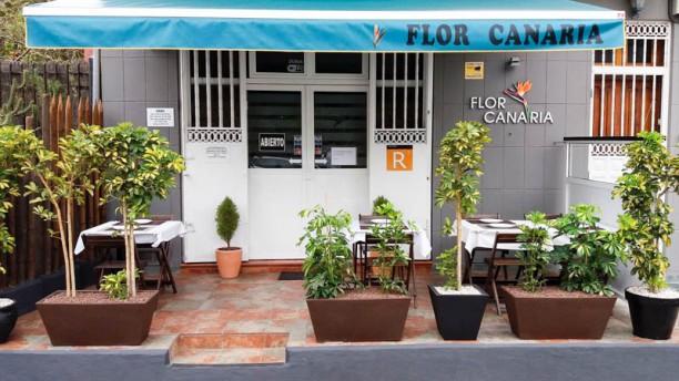 Flor Canaria Vista terraza