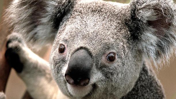 Bistrot d'Elena TEST LF koala