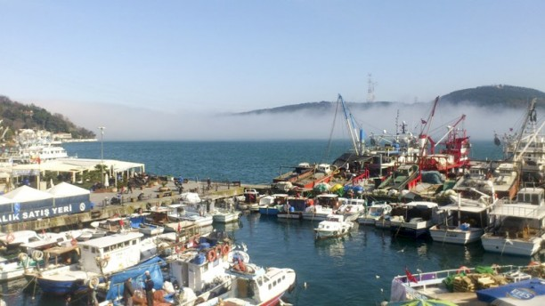 Dolphin Balık Views to the port