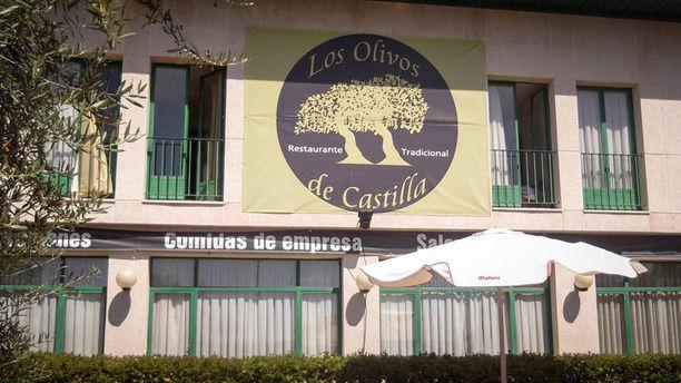 Los Olivos de Castilla