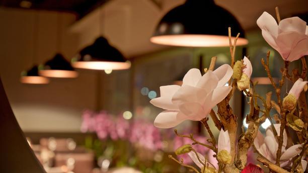 Xie Asian Restaurant