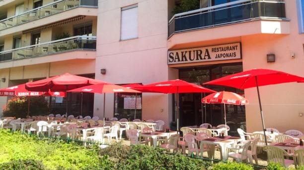 Sakura Terrasse