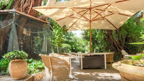 Wi Jungle Jardin