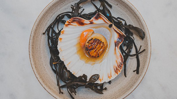 The Green Rose Coquille