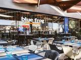 Blue Frog Finestrelles