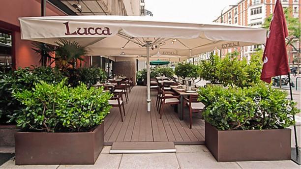 Lucca Terraza
